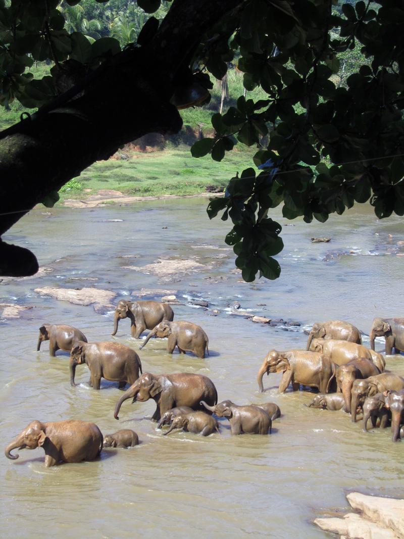 orpokoti-elefantit-kylpee3