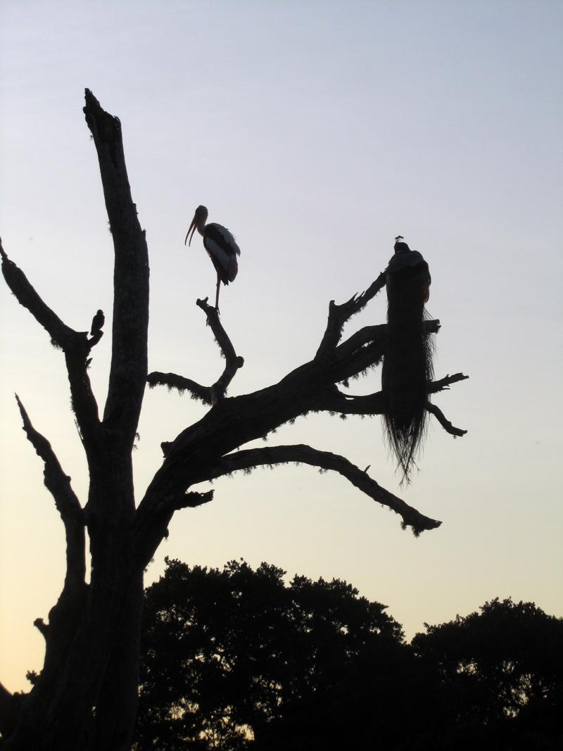 yala-lintujen-silhuetti